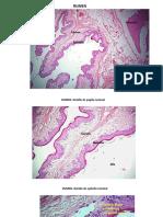 Fotos Digestivo II con referencias corregido