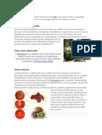 Frutos simples.doc
