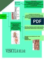 MAPA CONCEPTUAL DE VESICULA BILIAR
