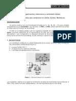 BM_05_09-06-2008 Principales moléculas que componen la célula Ácidos Nucleicos