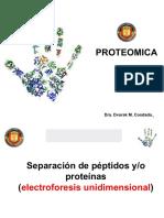 Electroforesis unidimensional
