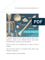 Cinco Tipos de Huesos