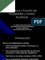 08-Estructura y Función de Acidos Nucleicos
