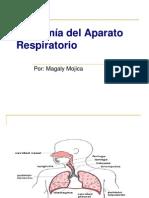 Anatomía del Aparato Respiratorio