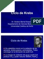 15-Ciclo Krebs