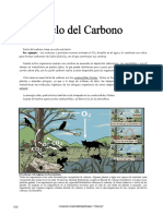 IV Bim - 1er. año -  Bio - Ciclo del Carbono II