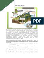 ciclo biogeoquimico calcio.docx