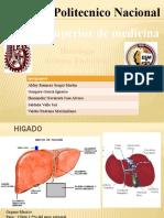 Exposicion sistema endocrino Equipo #1
