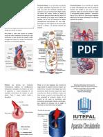 Triptico circulatorio