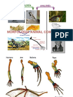 morfologia-animal-comparada2
