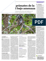 El 40% de primates de la región están bajo amenaza