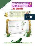 Las-Plantas-para-Primero-de-Primaria.pdf