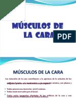 docdownloader.com-pdf-musculos-de-la-cara-dd_37f19c8a1cf6b7a11d6690cf0131fe23