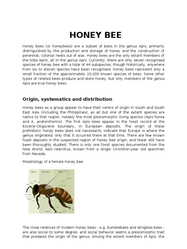 the secret life of bees book online pdf