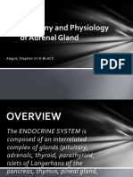 Anatomy and Physiology of Adrenal Gland