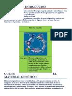 material genetico.docx