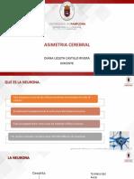 ASIMETRIA CEREBRAL (1)