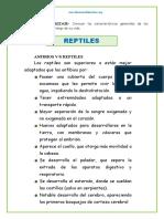 Reptiles (Reparado)