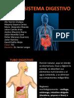 Digestivo Histo