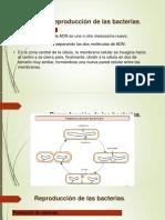 microbiologia-6-13