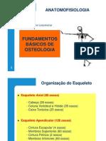 Fundamentos Básicos de Osteologia