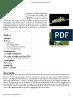 Oruga (larva).pdf