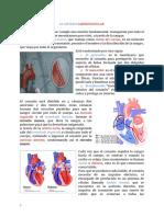 Resumen Cs Naturales SISTEMA CIRCULATORIO (1)