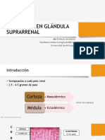 Semiología adrenal.pdf