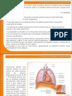 07_sistema_cardiovascular (1)