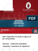 fisiopatoapoptosiseinflamacin-150827145808-lva1-app6891-converted