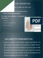 bioquimica ligamento periodontal