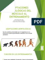 MORFOLOGÍA DEPORTIVA (1)