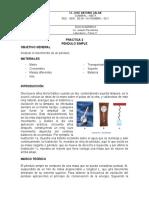PRACTICA 2 pendulo simple.docx