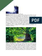Divisiones de la Filosofía