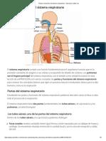 Partes y funciones del sistema respiratorio - Descubre cuáles son.pdf