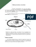GUÍA DE ORGANELOS CELULARES