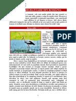 Pasari migratoare din Romania 1_referate.wyz.ro.docx