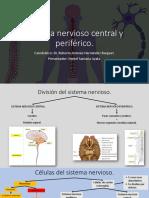 Sistema nervioso central y periférico_