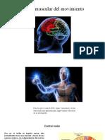 Control neuromuscular del movimiento [Autoguardado]