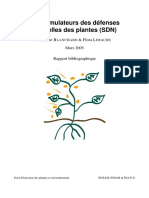 Rapport_SDN.pdf