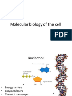 Molecular biology (2).ppt