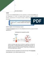 UNIDAD TEMATICA 3-SISTEMA CIRCULATORIO III