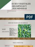 Especies vegetales gramíneas y leguminosas.pptx