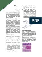 RESUMEN Histología del estómago
