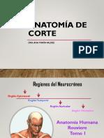 TEMA 3 REGIONES DEL NEURO CRANEO.pdf