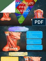 TRIANGULOS DEL CUELO.pdf