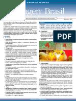 Circular Técnica Aviagen - Manejos que melhoram ganho de peso e conversão alimentar - Setembro 2007