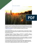 PROPIEDADES Y BENEFICIOS DE LA ESPELTA.pdf