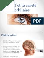11-Oeil et cavité orbitaire