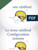 5-Tronc cérébral